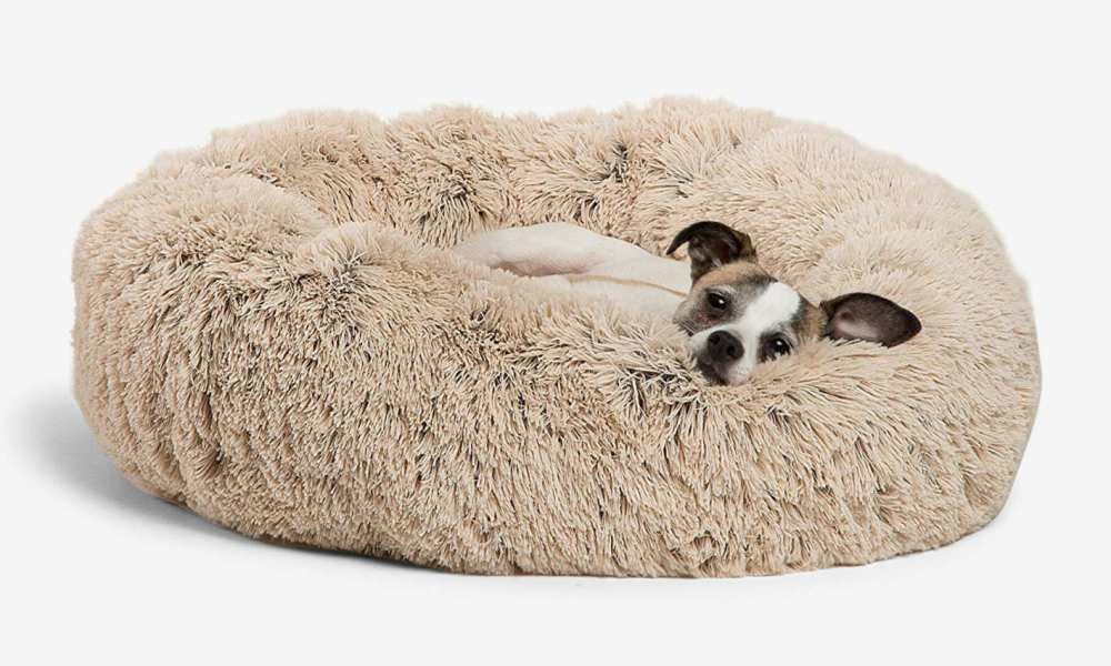 A Guide To The Best Portable Roll-Up Dog Beds