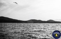 Workshop fotografico Lago Trasimeno con Click in Umbria