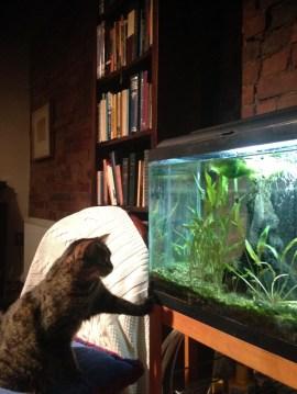 cat fish tank.JPG