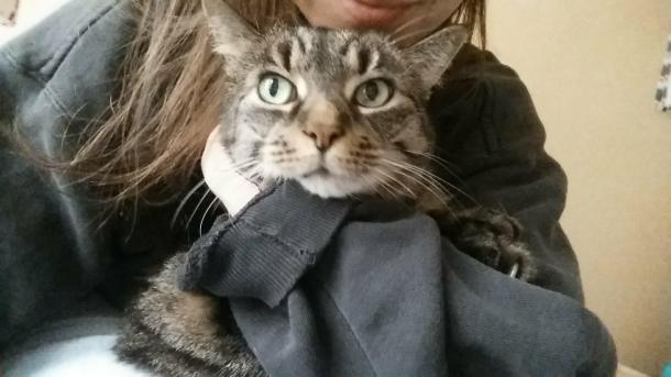 cat me