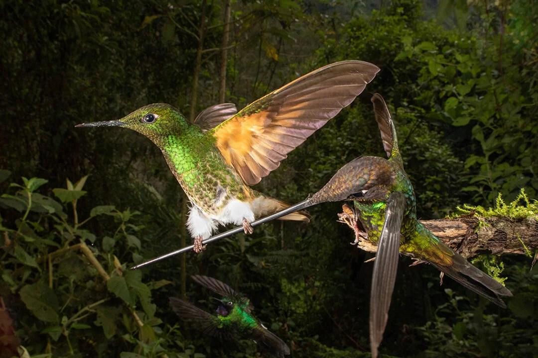 Competição irá premiar melhor fotografia de aves