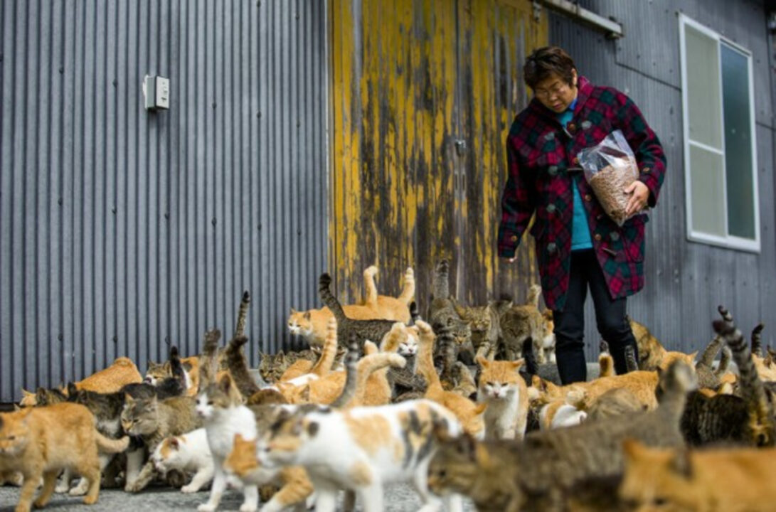 6 gatos para cada  morador conheça a Ilha dos gatos no Japão