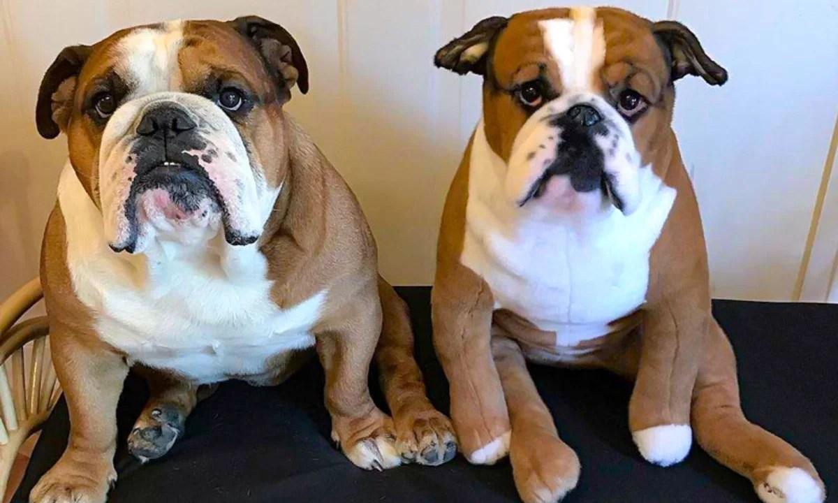 Empresa faz sucesso com  réplicas idênticas de animais de estimação