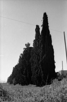 cypress-row