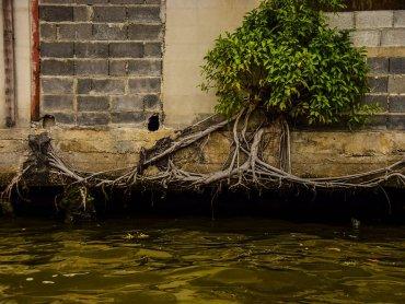 A Bangkok la natura si fa spazio ovunque