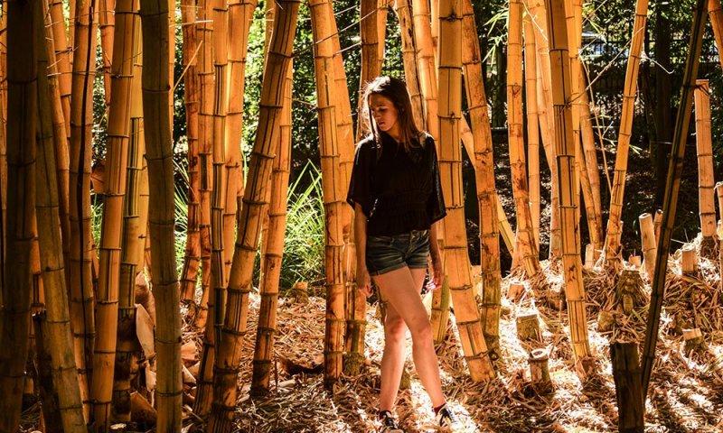 Brisbane Botanic Gardens Io nel Bosco di Bamboo