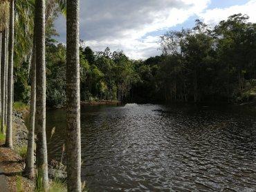 Brisbane Botanic Gardens La Laguna