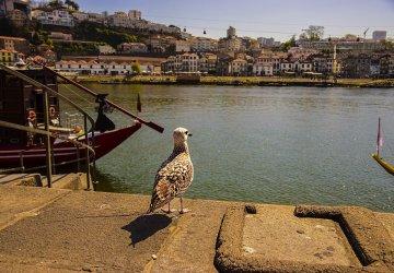 Porto: La vista sul Douro dalla Ribeira
