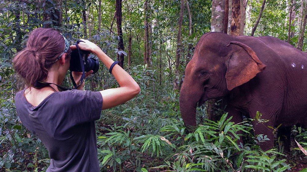Elefanti Cambogia