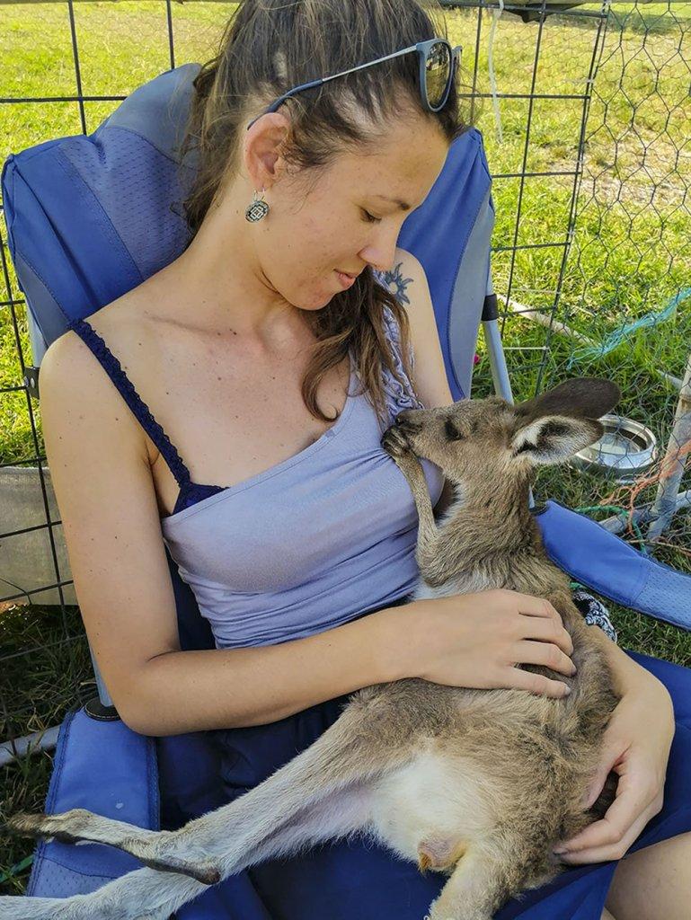 Nutrire baby canguri