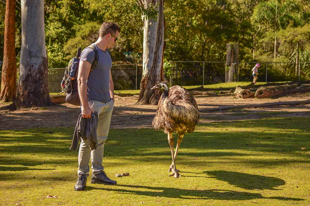 Uccelli tipici in Australia