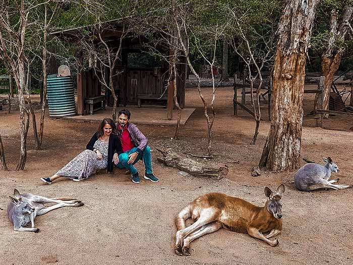 Australia: incontro con i canguri