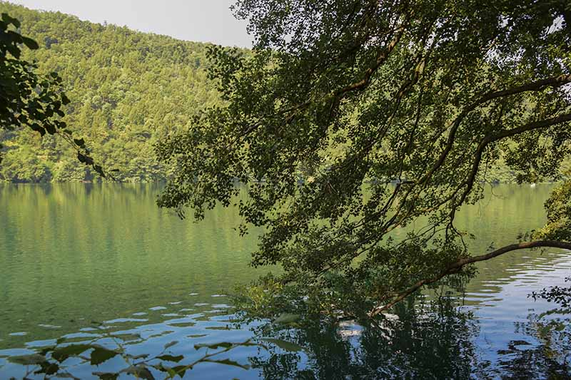 Lago di Levico: Acqua turchese e verde ovunque