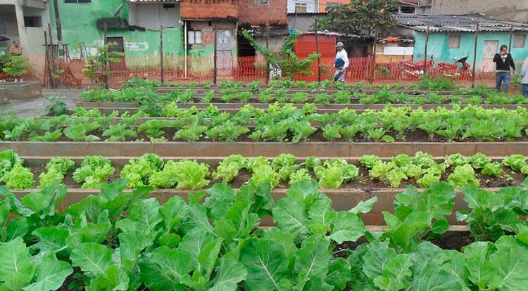 Política Estadual de Agricultura Urbana e Periurbana é aprovada na Assembleia