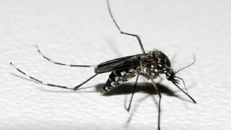 Chuva e calor aumentam o risco de proliferação do Aedes aegypti