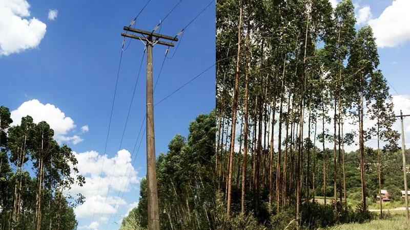 Câmara quer restringir o plantio de árvores próximo a rede elétrica