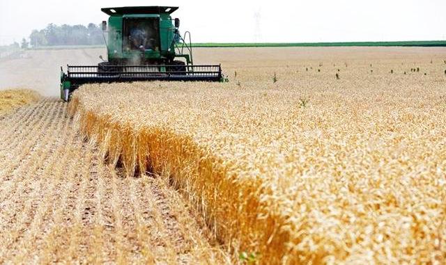 RS: colheita do trigo é iniciada no Estado, diz Emater/RS