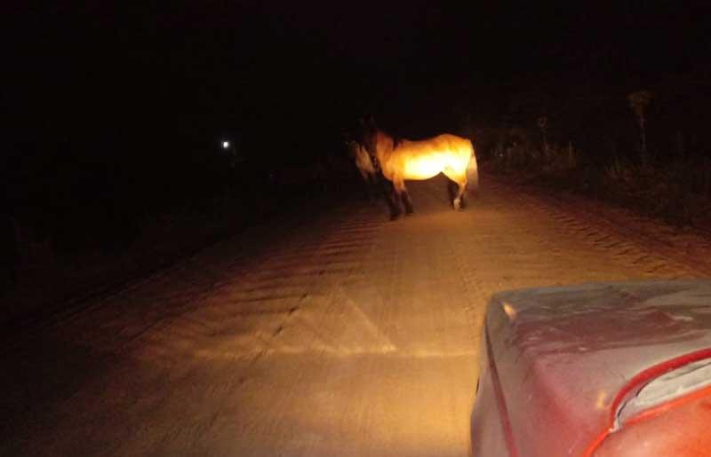 Cavalos soltos oferecem perigo aos motoristas e pedestres em Tapes