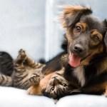 6986681 Dog Cat Friends Clientelas