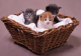 Kittens To Order…
