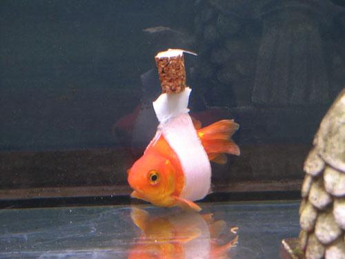 goldfishcork