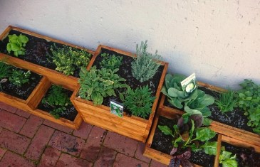 Your Winter Herbs & Veggies with Lifestyle Home Garden