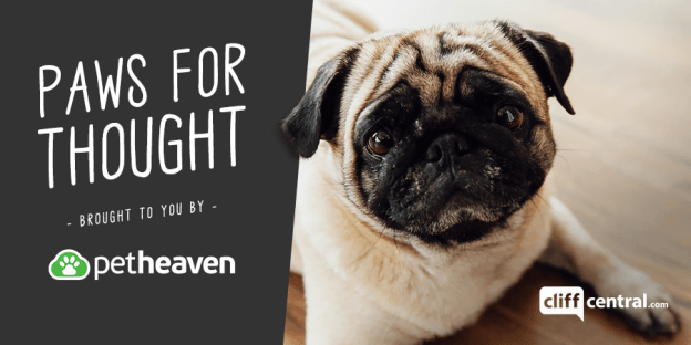 e2f48f0fe Paws for Thought - brought to you by Pet Heaven - CliffCentral