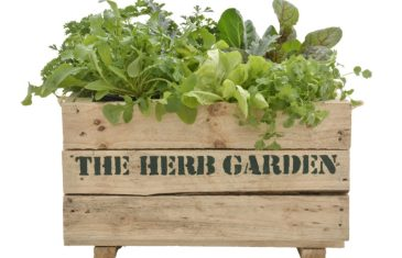 Planting Summer Vegetables with Lifestyle Home Garden