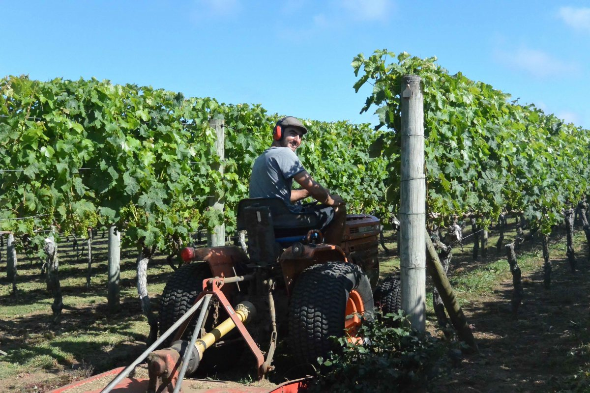 Dan on the tractor, mowing the grass between the rows