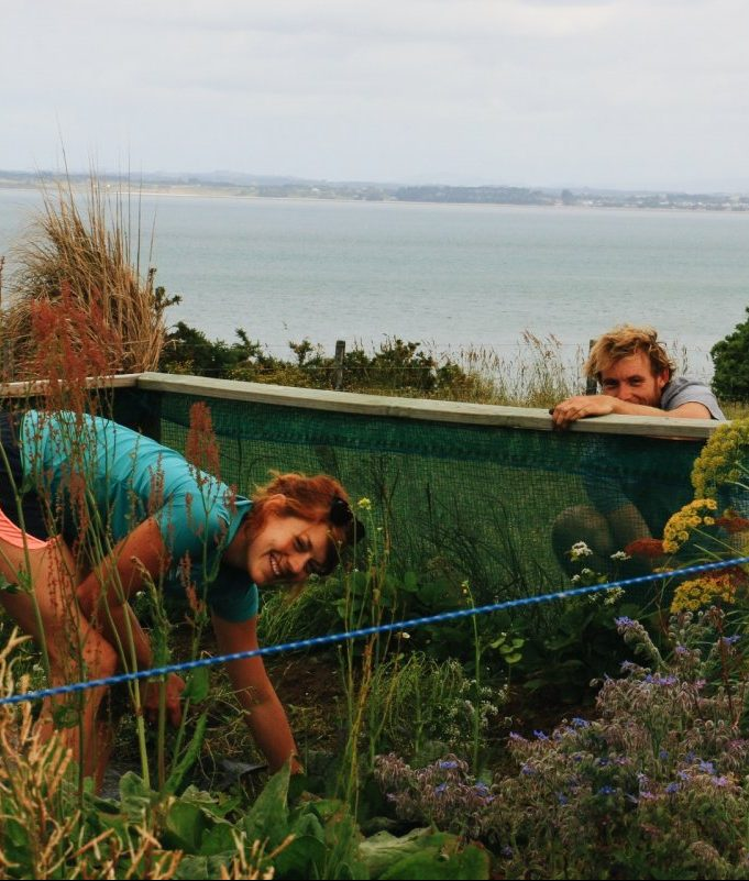 Ben and Hedda work in the veggie garden, overlooking the Manukau Harbour