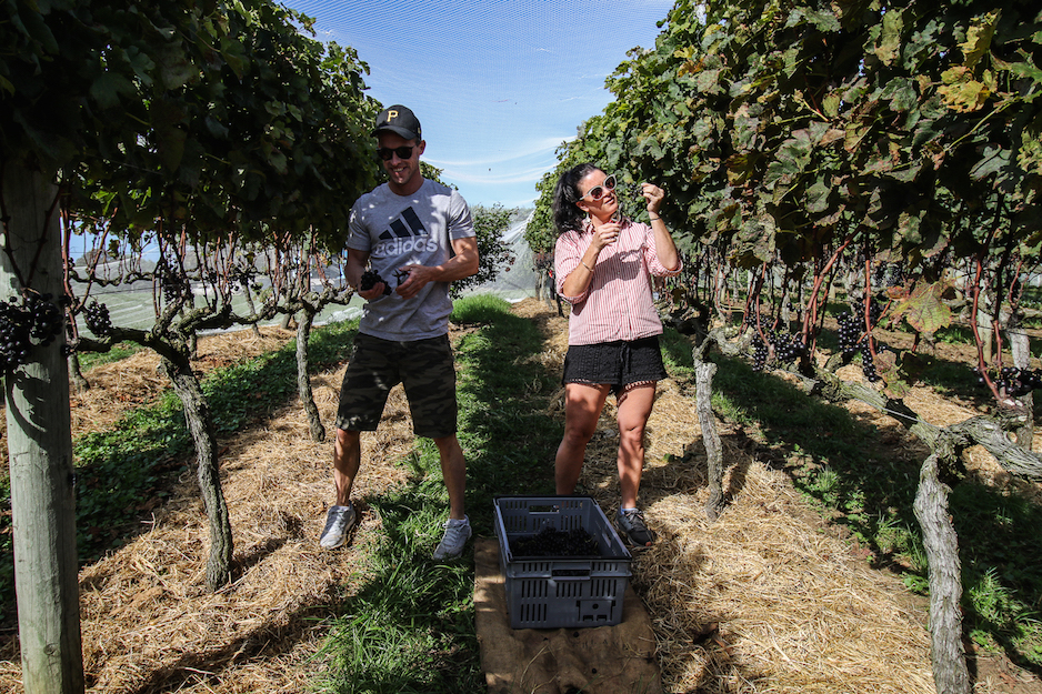Tash and Peter at the Cliff Edge wine 2018 grape harvest