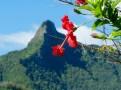 Avarua - Rarotonga