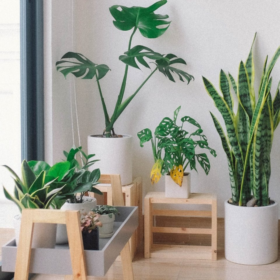 decorating a bedroom with plants