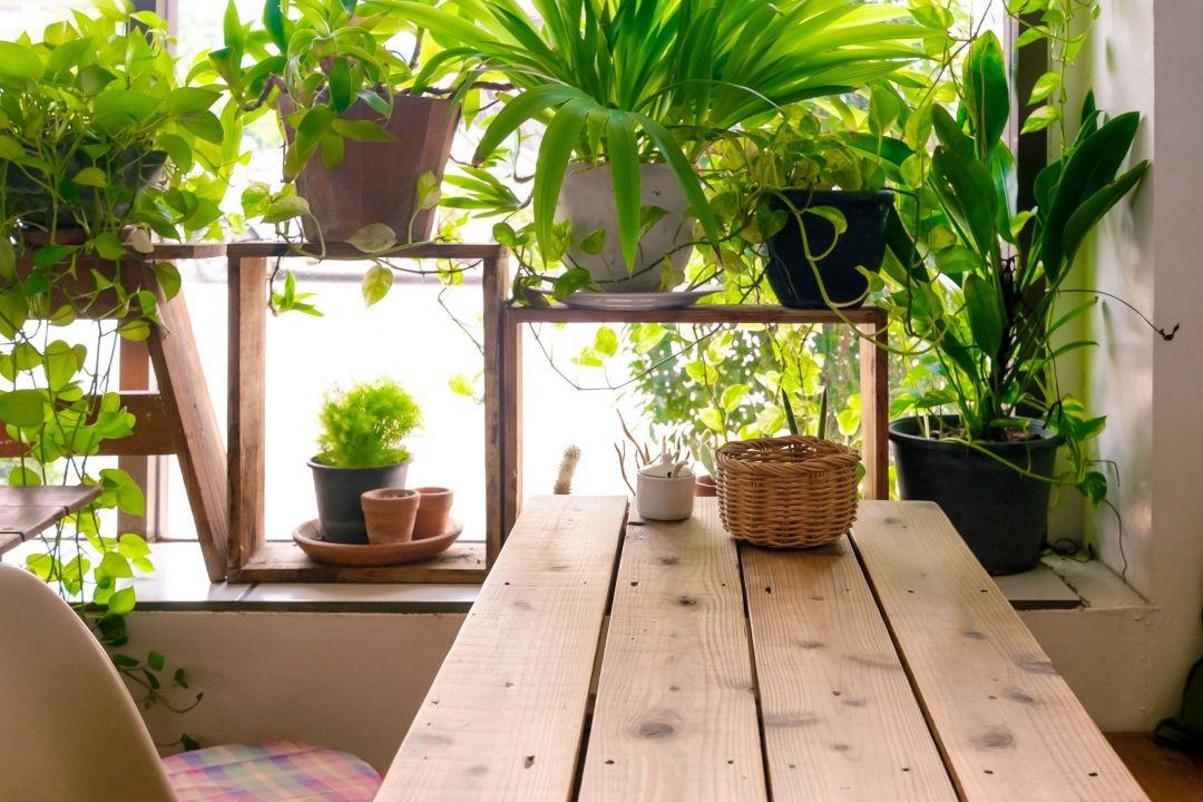 indoor plants that reduce air pollution