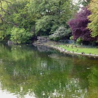 Wildlife - Saint Stephen's Green Dublin
