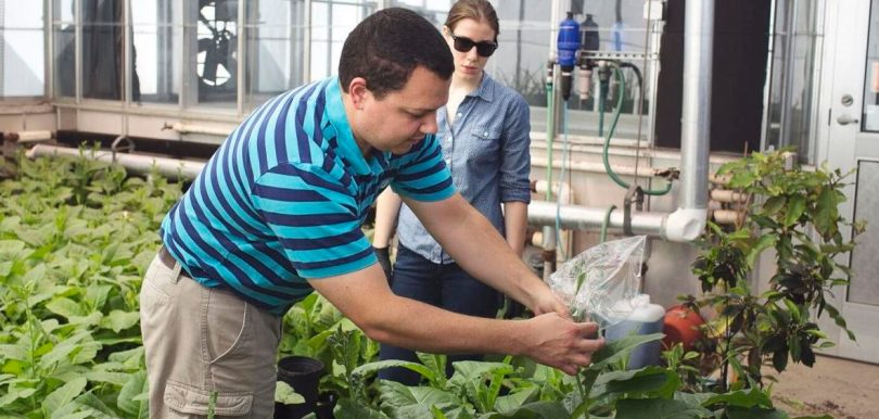Re-engineering photosynthesis: How two LSU biology professors hope to feed the world's growing population