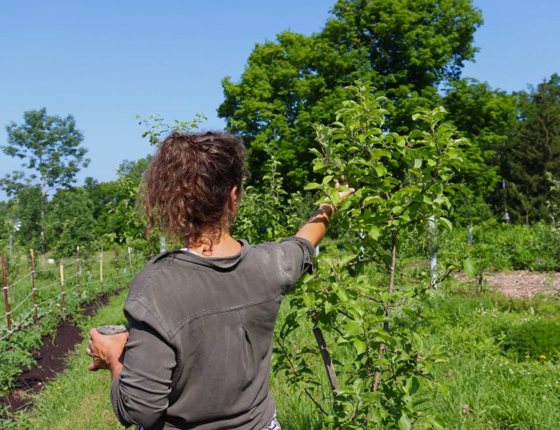 Ohio Farmers' Key to Combat Climate Change? Transition to Organic