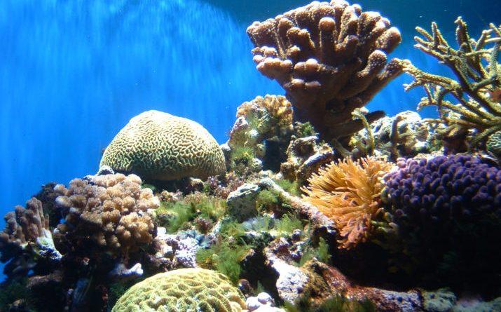 Impact of Warming Oceans