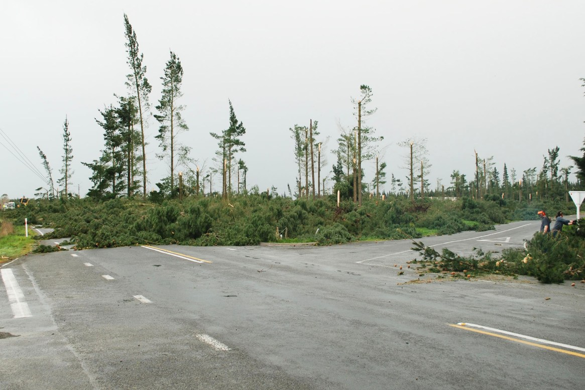 Fig. 3: September 2013 nor-west winds in Canterbury downed large sections of plantation forests. In one area fallen power lines started a fire. Most of the damaged trees were either immature or so entangled that the cost of harvesting them far exceeded their commercial value. Most were felled and sold for firewood, with stumps bulldozed and burned, releasing the carbon back into the atmosphere (Image: Whitelaw).