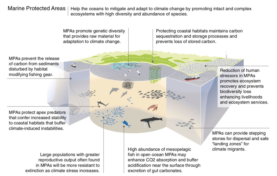 Fig. 2: Eight illustrative pathways by which MPAs can mitigate and promote adaptations to climate change (Image: Roberts et al /PNAS).