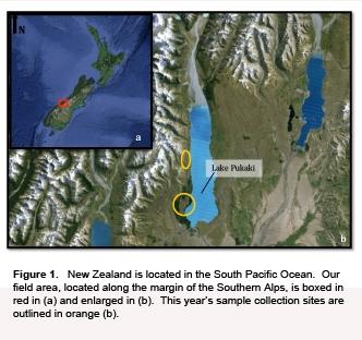 Pukaki NZ 2015 exp