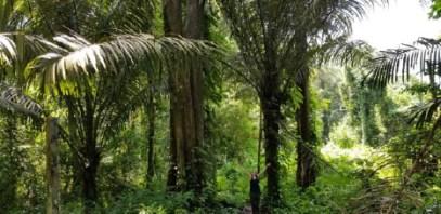 Equatorial Borneo.