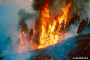 """""""Forest fire"""" by Dave Powell, USDA Forest Service, Image #0806078, www.forestryimages.org"""