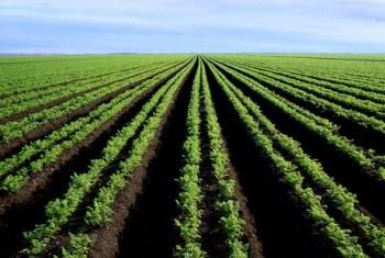 crops-rows
