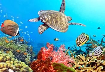 reef coral barrier