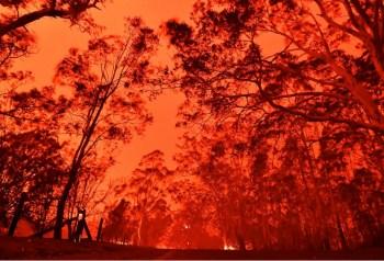 australia fire brush