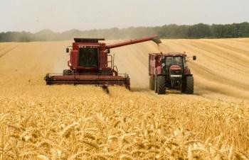 crops harvest
