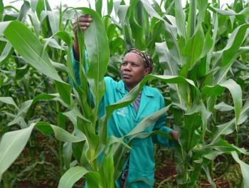 africa crop growing