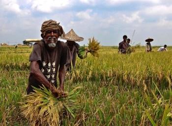 bangladesh crops