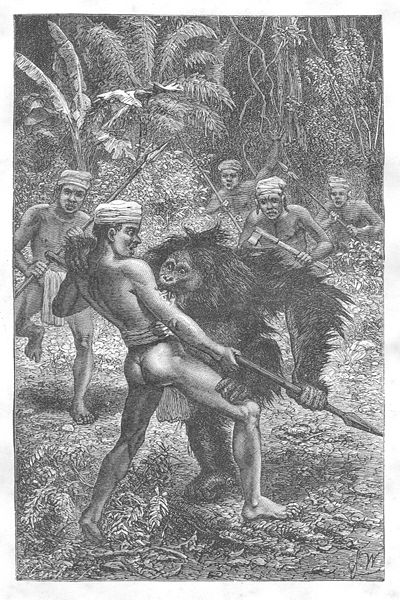 Malay Archipelago Orang-Utan attacked by Dyaks. Woodcut by Joseph Wolf, 1869